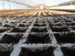 Cover photo for From the Field-Agronomy Notes: Vol. 2, Num. 2